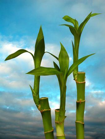 Spring. Bamboo Stock Photo