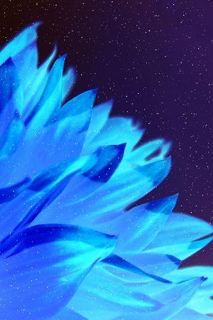 coverbook: Neon sfondo con petali  Archivio Fotografico