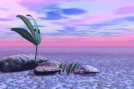 descend: Lilac sunset. Plant Stock Photo