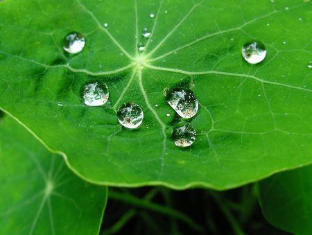 lustre: Brilliant drops on leafs