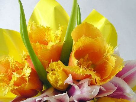 Bouquet of yellow tulips photo
