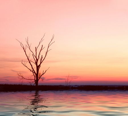 Pink sunrise with lonely tree Stock Photo - 432690