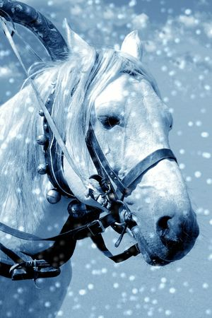 Horse in snow photo