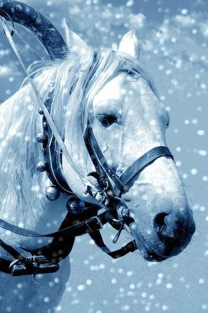 Horse in snow Stock Photo