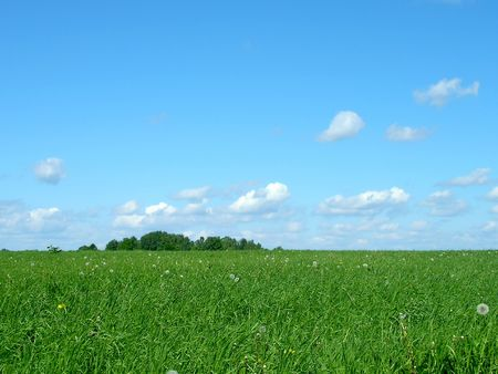 Sky and green grass. Landscape photo
