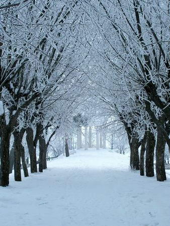 Winter avenue Stock Photo