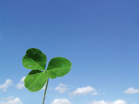 Leaf clover on a background blue sky photo