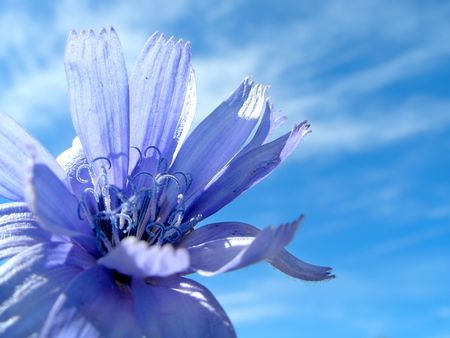 Blue flower and blue sky photo