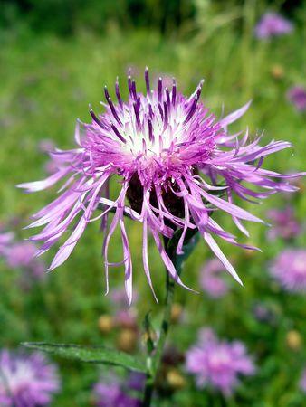 Summer flower Stock Photo - 496289