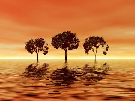 Trio trees. Golden sunset Stock Photo - 522413