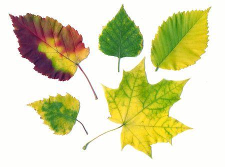 captivating: Autumn different leaves