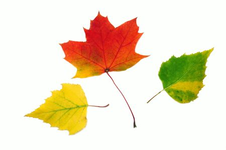 Autumn different leaves photo