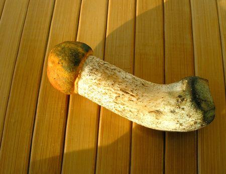 Aspen mushroom photo