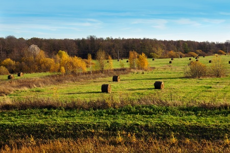 rick: Autumnal nature, scenery. Country hayfield in day time Stock Photo