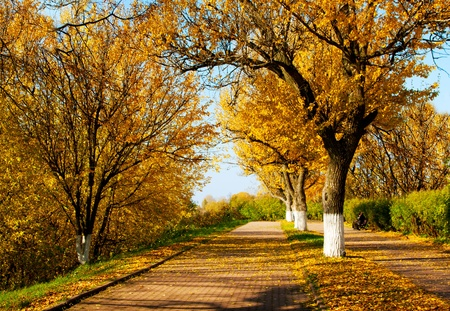 Autumnal nature, scenery in central park, Kostroma city photo