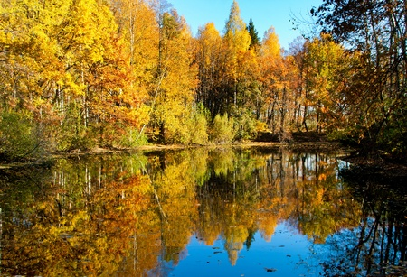 Autumnal nature, scenery. Forest and lake with reflected trees photo