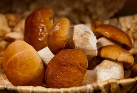 edulis: Autumn season, white mushrooms  in a basket