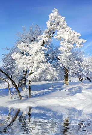 Winter  park, scenery with trees in sunny cold day photo