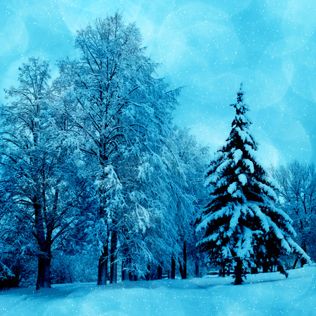 Winter picture , scenery with trees in cold day  photo