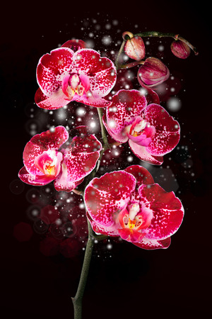 Glowing flower Magical orchid on  black background, card photo