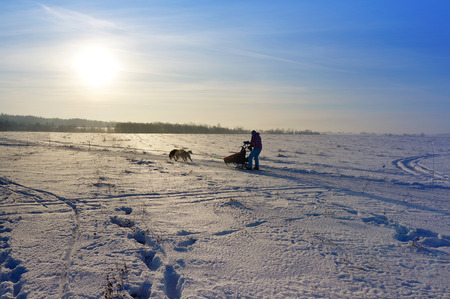 Winter, north fields, to drive in a sledge with siberian husky, landscape photo