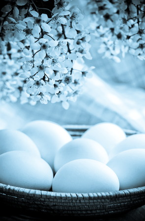hen's: Easter white eggs  for holiday  Photo in blue tone