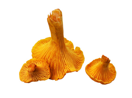 Food  ingredient - chanterelle mushrooms isolated over white background photo
