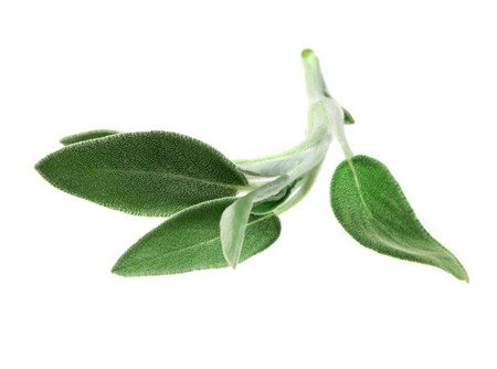 sage: Food  ingredients - clary sage isolated over white background