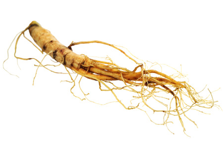 fresher:  Medical herbs -  ginseng root  isolated over white background Stock Photo