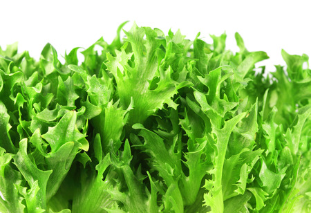 Food  ingredients -  salad  lettuce  isolated over white background photo