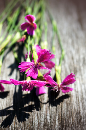 Blossoming wild flowers on wooden background  photo