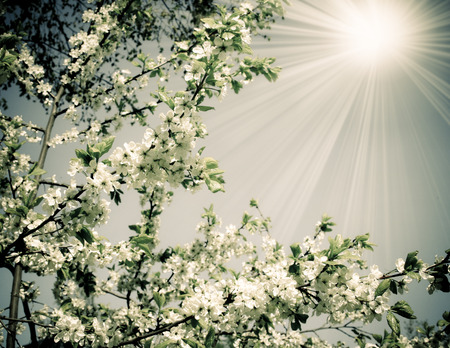 Spring nature, blossoming trees. photo in a retro style photo