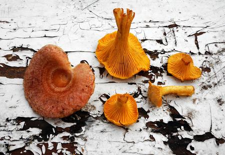torminosus: Mushrooms Chanterelle  and Lactarius torminosus Stock Photo