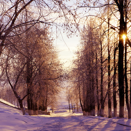 woodland scenery:  Winter nature, sunset, scenery with trees in park