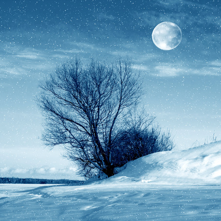 rime frost: Winter nature, moon and tree and snowstorm