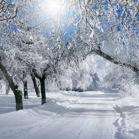 NATURE: la naturaleza de invierno, paisaje de bosques, en el día soleado