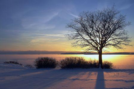 Puesta de sol de invierno y el �rbol