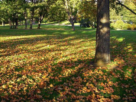 Autumn park. Shadows in the park