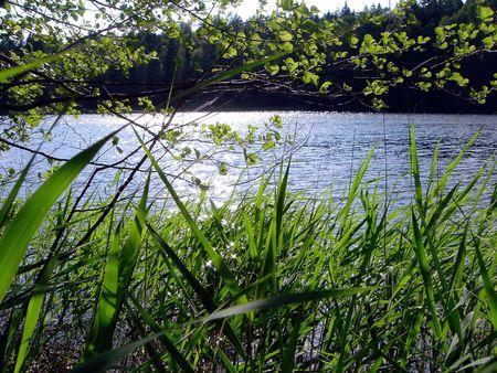 Verde c�sped, �rboles y lago en el verano