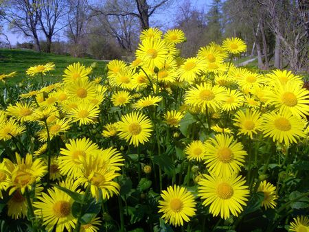 Yellow flowers in the park