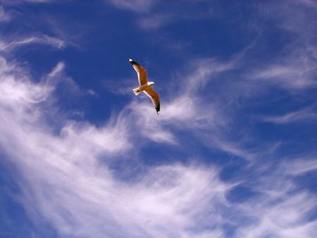 The seagull on a background of the dark blue sky