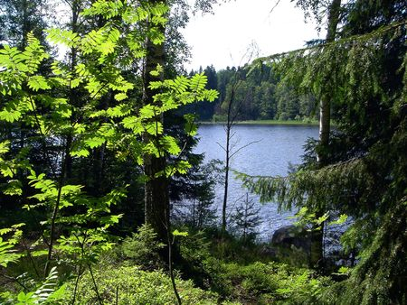 Green grass, trees and  blue lake in the summer Stock Photo - 349318