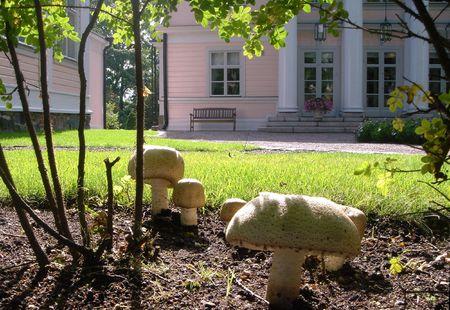 Edible mushroom in garden Stock Photo