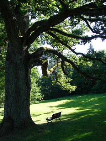 Old oak and bench in english park  Stock Photo