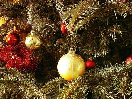 The gold and red spheres hangs on a Christmas tree                  photo