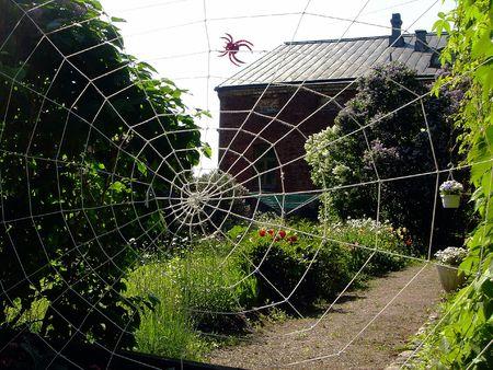 arachnoid: Corda web in un giardino privato in estate