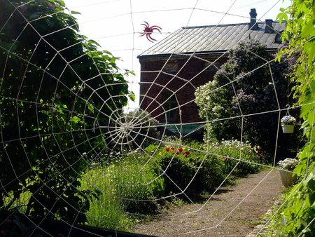 Rope web in a private garden in the summer