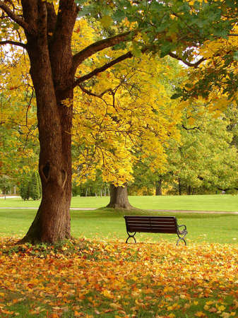 walk in the park:                                Bench and oak in city park in the autumn Stock Photo