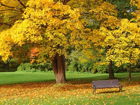 Bench and maple in city park in the autumn           photo