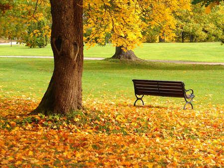 banc de parc: Banc en ch�ne et en parc de la ville � l'automne